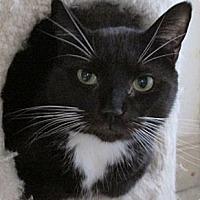 Adopt A Pet :: Benny - Monroe, CT