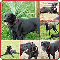 Adopt A Pet :: BONES - Inverness, FL