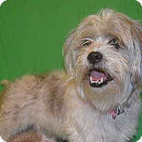 Adopt A Pet :: Macy - Hazard, KY