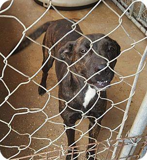 Plott Hound Mix Dog for adoption in Hammond, Louisiana - Sadie