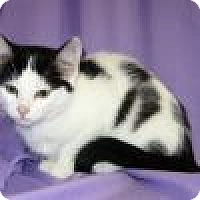 Adopt A Pet :: Elara - Powell, OH