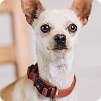 Adopt A Pet :: Victoria - Portland, OR