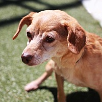 Adopt A Pet :: Petra - Redwood City, CA
