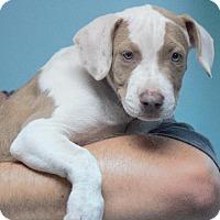 Adopt A Pet :: Martini - Columbus, GA