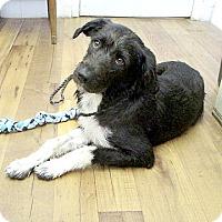 Adopt A Pet :: 17-d06-028 Marty - Fayetteville, TN