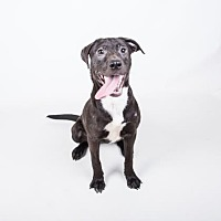 Adopt A Pet :: Drew Barrymore - Decatur, GA