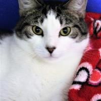 Adopt A Pet :: Toby - Lynchburg, VA