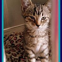 Adopt A Pet :: Blue - Berkeley Springs, WV
