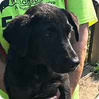 Adopt A Pet :: Glenda - Arlington, VA