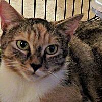 Adopt A Pet :: Camille - Durham, NC