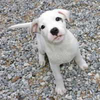 Mixed Breed (Medium) Mix Dog for adoption in Phenix City, Alabama - Corbin