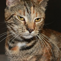 Adopt A Pet :: SHANNON - Clayton, NJ