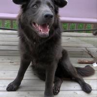 Adopt A Pet :: Murphy - Sherwood Park, AB
