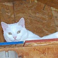 Adopt A Pet :: Ranger - Brainardsville, NY