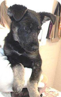 German Shepherd Dog Mix Puppy for adoption in McDonough, Georgia - Tasha