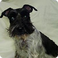 Adopt A Pet :: Ellie - North Benton, OH