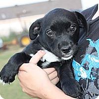 Adopt A Pet :: Addison - PENDING - kennebunkport, ME