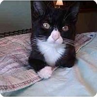 Adopt A Pet :: Sylvia - Erie, PA