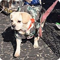 Adopt A Pet :: Minnie - Westfield, IN