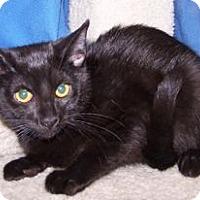 Adopt A Pet :: K-Alice5-Samba - Colorado Springs, CO