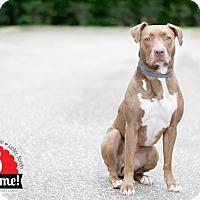Adopt A Pet :: Chloe - Jupiter, FL