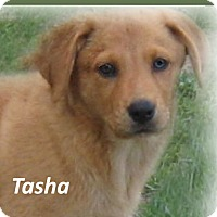 Adopt A Pet :: Tasha - Marlborough, MA