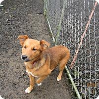 Adopt A Pet :: Rio - Tillamook, OR