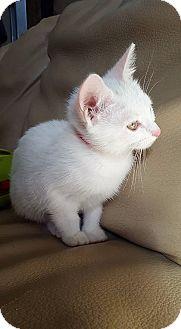 Domestic Shorthair Kitten for adoption in Clarksville, Tennessee - Stripe