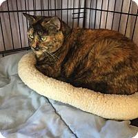 Adopt A Pet :: Mechita - Lunenburg, MA