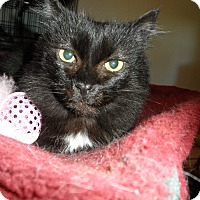 Adopt A Pet :: Mommsie - Milwaukee, WI