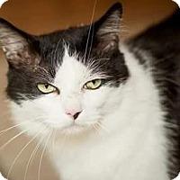 Adopt A Pet :: Bueller - Ennis, TX