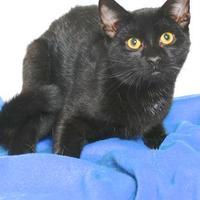 Adopt A Pet :: AMOR - Gloucester, VA