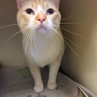 Adopt A Pet :: Olaf - Luling, LA