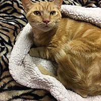 Adopt A Pet :: Sonny - Butner, NC