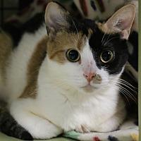 Adopt A Pet :: Ivy - Holland, MI