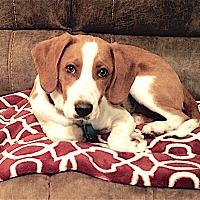Adopt A Pet :: Naomi - Houston, TX