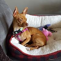 Adopt A Pet :: Opera - Hamilton, ON