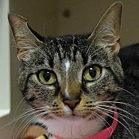 Adopt A Pet :: Phish - Fairport, NY