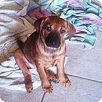 Adopt A Pet :: Remy - Silsbee, TX