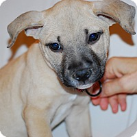 Adopt A Pet :: Angela - Randolph, NJ