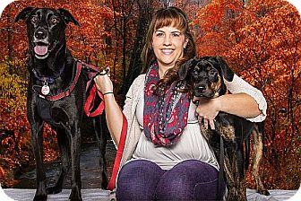 Labrador Retriever/Hound (Unknown Type) Mix Puppy for adoption in Livonia, Michigan - Doogie - Adopted 11/01/2014