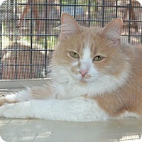Adopt A Pet :: Paige - Roanoke, TX