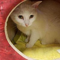 Adopt A Pet :: Te - Harleysville, PA