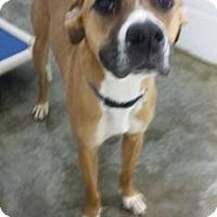 Adopt A Pet :: Bogart - Paducah, KY