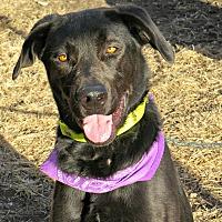 Adopt A Pet :: Lola - tama, IA