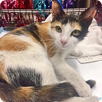 Adopt A Pet :: Ola is Oh-So-Amazing - Brooklyn, NY