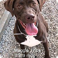 Adopt A Pet :: Maggie - Smithtown, NY