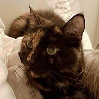 Adopt A Pet :: Allie - Yorba Linda, CA