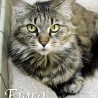Adopt A Pet :: Fiora - Bradenton, FL