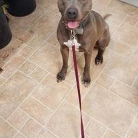 Adopt A Pet :: Pepper - Cody, WY